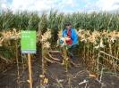 Krajowe dni kukurydzy - 15.09.2017_10