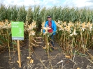 Krajowe dni kukurydzy - 15.09.2017_11