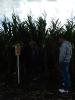 Krajowe dni kukurydzy - 15.09.2017_5