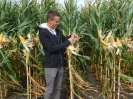 Krajowe dni kukurydzy - 15.09.2017
