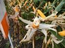Krajowe dni kukurydzy - 15.09.2017_8