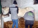 Wizyta w stadninie koni u państwa Kucharskich_10