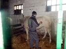 Wizyta w stadninie koni u państwa Kucharskich_12