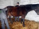 Wizyta w stadninie koni u państwa Kucharskich_13