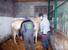 Wizyta w stadninie koni u państwa Kucharskich_18