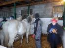 Wizyta w stadninie koni u państwa Kucharskich_19