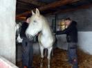 Wizyta w stadninie koni u państwa Kucharskich_21