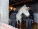 Wizyta w stadninie koni u państwa Kucharskich_22