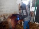 Wizyta w stadninie koni u państwa Kucharskich_23