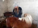 Wizyta w stadninie koni u państwa Kucharskich_24
