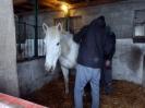 Wizyta w stadninie koni u państwa Kucharskich_25