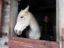 Wizyta w stadninie koni u państwa Kucharskich_27