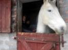Wizyta w stadninie koni u państwa Kucharskich_28