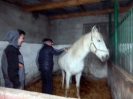 Wizyta w stadninie koni u państwa Kucharskich_29