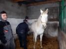 Wizyta w stadninie koni u państwa Kucharskich_30