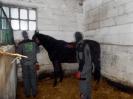 Wizyta w stadninie koni u państwa Kucharskich_32