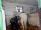 Wizyta w stadninie koni u państwa Kucharskich_34