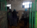 Wizyta w stadninie koni u państwa Kucharskich_35