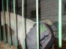 Wizyta w stadninie koni u państwa Kucharskich_7