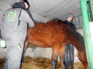 Wizyta w stadninie koni u państwa Kucharskich_9