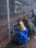 Z wizytą we włocławskim Schronisku dla zwierząt_3